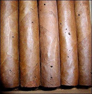 Tobacco Cigar Beetles